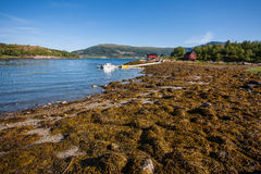 Fjord landscape. Royalty Free Stock Photography