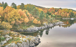 Fjord landscape, mixed forest in autumn Stock Photos