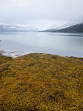 Fjord landscape with seaweed Royalty Free Stock Photography