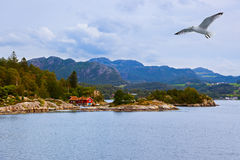 Fjord Lysefjord - Norvège Photo libre de droits