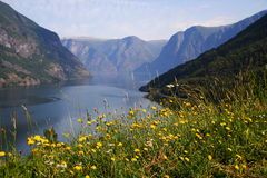 Fjord in Norway Stock Photo