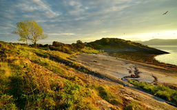 Fjord shore. Beautiful evening on fjord shore Stock Photography