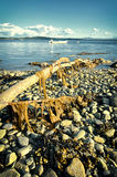 Fjord shore. Branches on rocky  fjord shore Stock Images