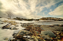 Fjord shore. Winter view on fjord shore Stock Images