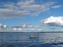 Fjord with swans. Wildlife in the water Royalty Free Stock Images