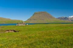 Fjord und ein Pferd Stockbilder
