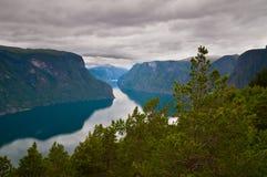 Fjorden i Norge med sörjer träd i förgrunden - bilder av Arkivfoto
