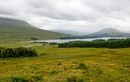 Fjordlodisar i Skottland Arkivbild