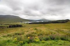 Fjordlodisar i Skottland Royaltyfria Bilder