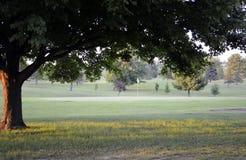 Fjortonde hål som inramas av ett träd Royaltyfri Fotografi
