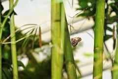 Fjäril på bambustjälk Arkivfoto