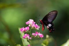 Fjäril på blomma Royaltyfri Foto