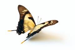 Fjäril på vit. Arkivfoto