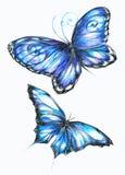 fjärilar Arkivbild