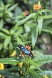 Fjärilar på den exotiska blomman Royaltyfri Foto