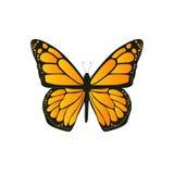 Fjärilen med orange vingar Fotografering för Bildbyråer