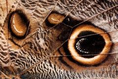 fjärilstexturvinge Royaltyfri Bild