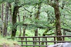 Fäktad vandringsled i en skog, Wicklow berg, Irland Arkivbilder