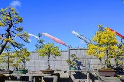 Flámulas coloridas de la carpa Imagenes de archivo