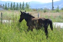 Flânerie par l'herbe Photos libres de droits