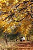 Flânerie par le stationnement d'automne image stock