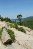 Flächenansicht vom Südblasen-Berg am Acadia-Nationalpark Lizenzfreie Stockbilder