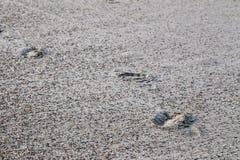 Fläckar av fot i sanden Royaltyfri Fotografi