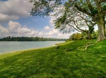 fläckig gräs- jordning Arkivfoto