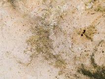 Fläckig makrotextur - sten - arkivbild