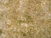 Fläckig makrotextur - sten - arkivfoto
