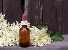 Fläderbäravkok i vatten Blommorna och bären används oftast medicinally mot influensa och feber, angina royaltyfri bild