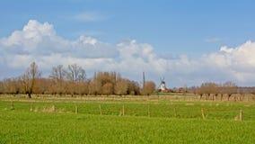 Flämische Landschaft mit üppigen grünen Wiesen der Windmühle und Erlen- und Weidenbäumen stockfotografie