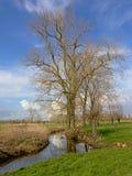 Flämische Landschaft mit bloßen Erlenbäumen und einem Abzugsgraben Lizenzfreies Stockbild