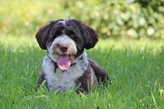 Flämtande hund royaltyfri foto