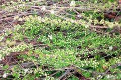 Fläta samman av den gröna och vita busken Royaltyfria Foton