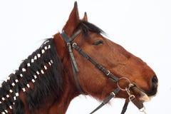 flätad hästmane Arkivfoton