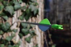 Flèche coincée dans l'arbre Photographie stock