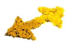Flèches de fleur Images libres de droits