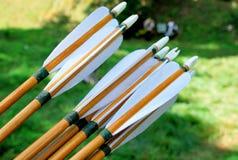 Flèches en bois pour le tir à l'arc Photo stock