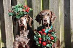 Flèches indicatrices de Noël Photo stock