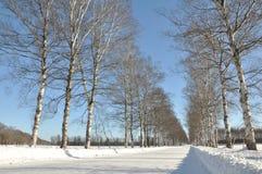Fléau des arbres en hiver Image stock