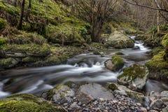 Flödande flod i Alva Glen, Skottland Royaltyfria Bilder