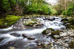 Flödande flod i skog Arkivbild