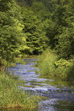 flödande fodrad flodroutetree Royaltyfria Bilder