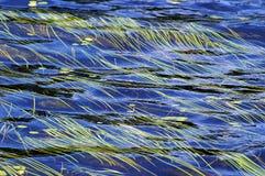 flödande gräs över vatten arkivfoto