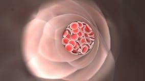 Flödande röda blodceller i en åder royaltyfri illustrationer