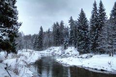 flödande skogflod Arkivfoto