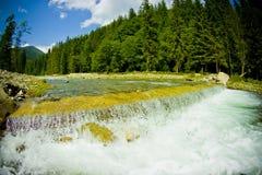 flödande skogflod royaltyfria bilder