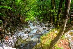 flödande skogflod Royaltyfri Bild