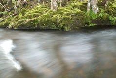 Flödande ström i skogen Royaltyfria Bilder